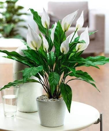 Reinvent your home with these Feng Shui Plants