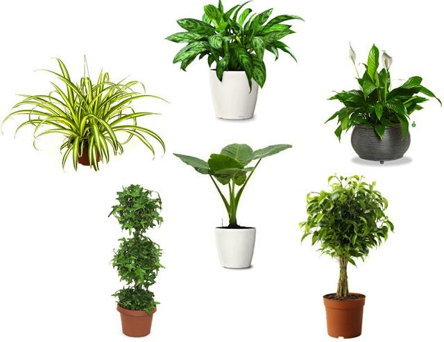 Greenery in Home Decor