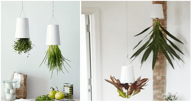Get ready to Listen the Melody of Plants at Home - Go Green