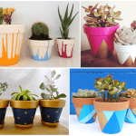 How to Pep up your Terracotta Pots