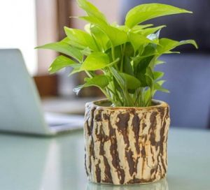 Add a Bit of Natural Kick to your Interior Designs - Go Green