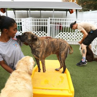 Facts to Consider Prior to Sending Your Pooch to a Day Care Center