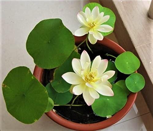 Feng Shui Plants