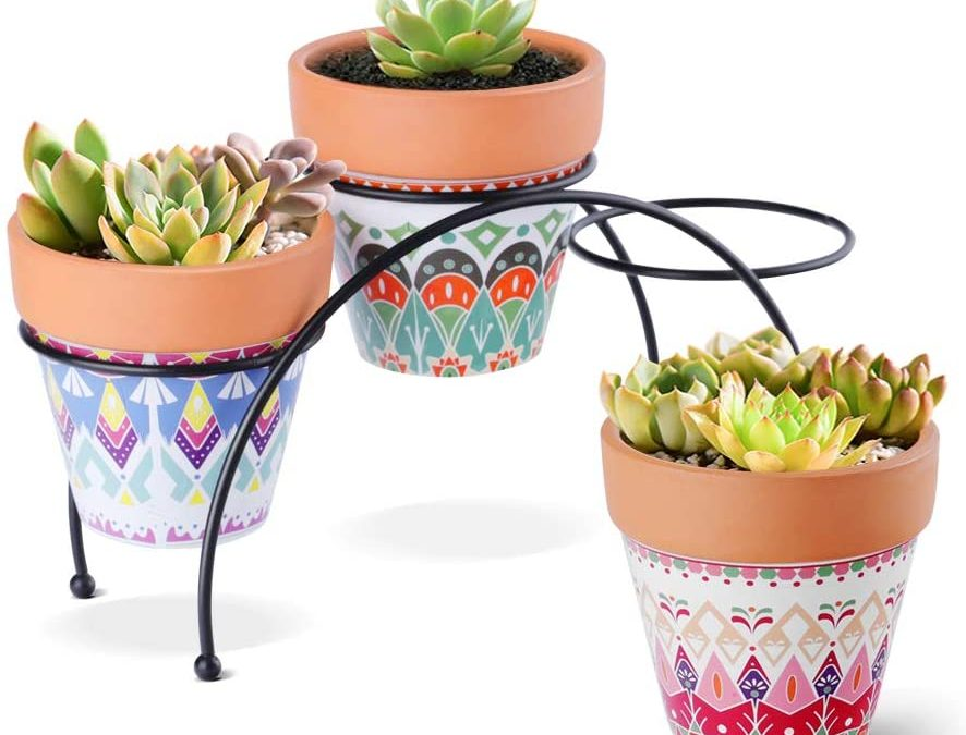 How to Pep up your Terracotta Pot