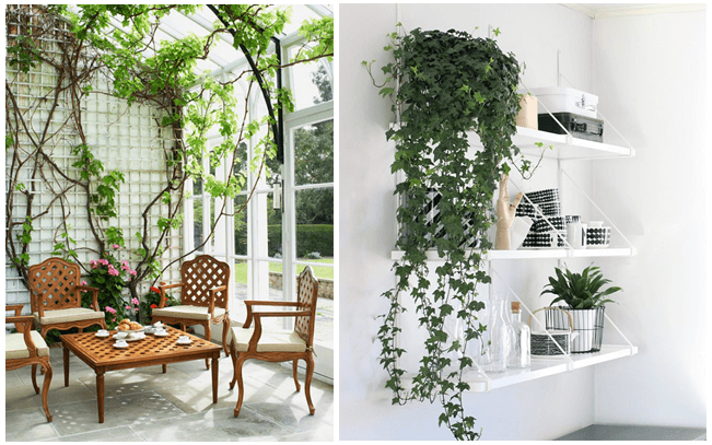 Get ready to Listen the Melody of Plants at Home