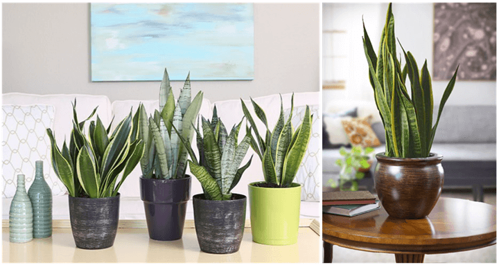 Add a Bit of Natural Kick to your Interior Designs - Indoor Plants