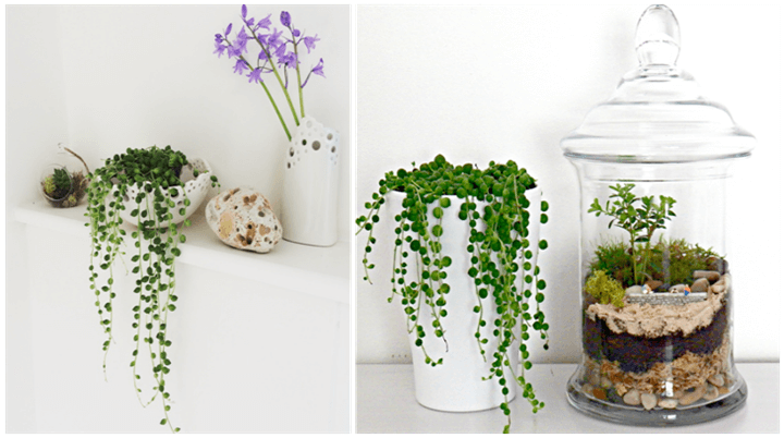 Add a Bit of Natural Kick to your Interior Designs - Nature