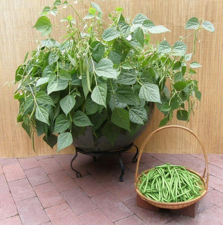 Grow your own vegetable