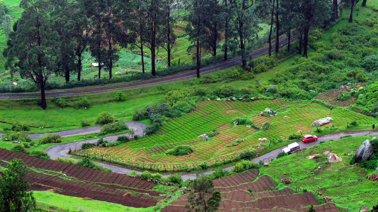 A Detailed Travel Guide for a Family Vacation in Ooty
