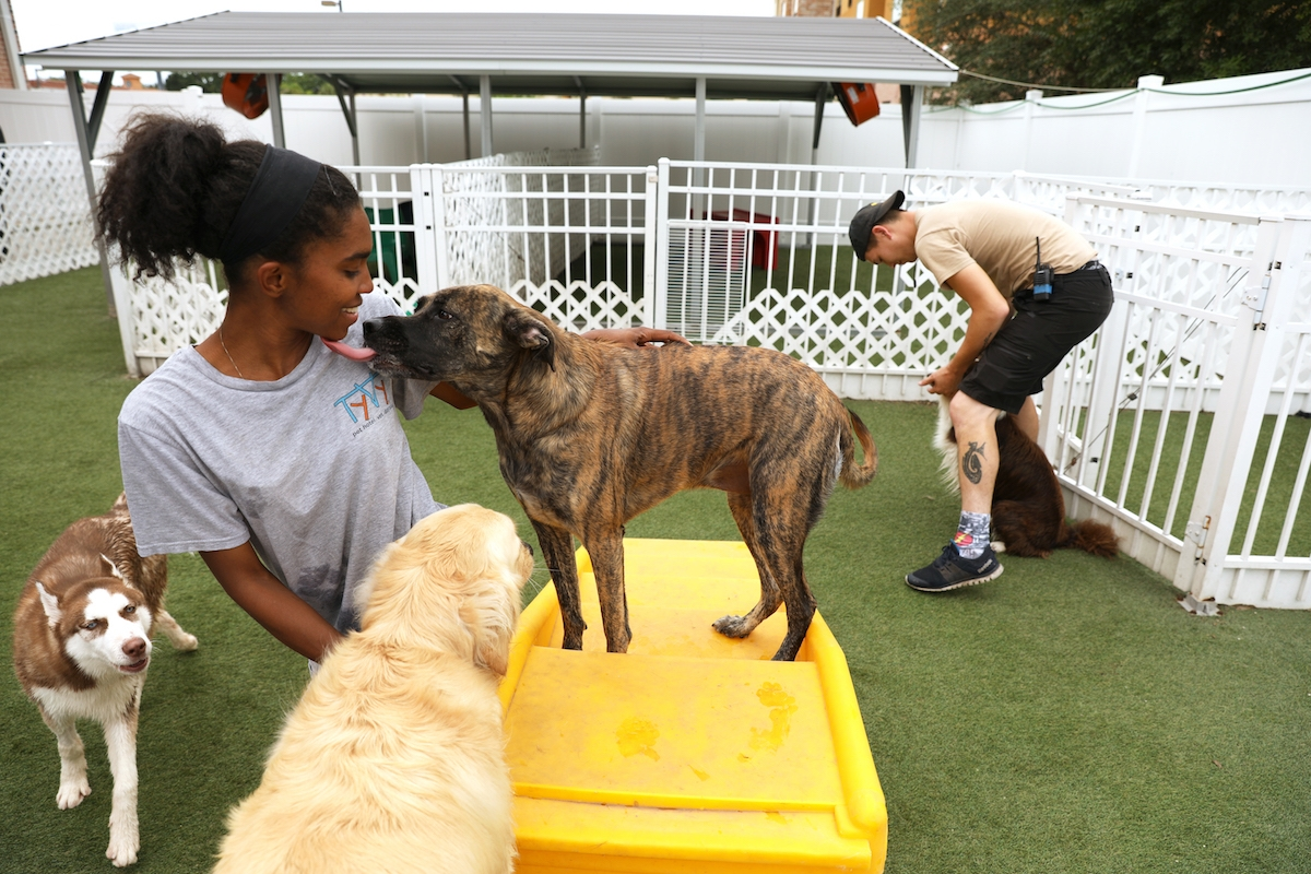 Facts to Consider Prior to Sending Your Pooch to a Day Care Centre