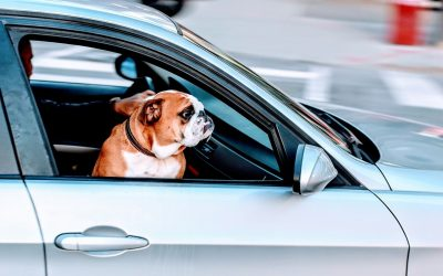 Are You Travelling with Your Pet? Carry these Inevitable Pet Gadgets