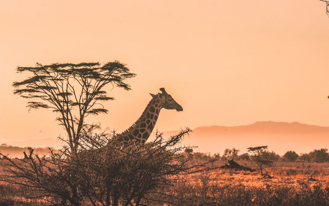 Traveling to Africa