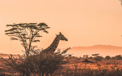 Ultimate Safety Tips to Consider While Traveling to Africa