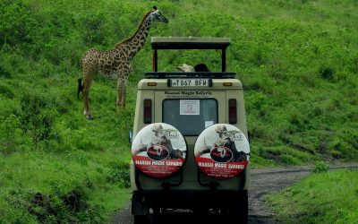 Planning An African Safari – Things To Keep In Mind