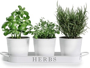 Planters for Kitchen Windowsill
